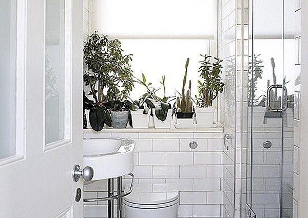 Bathroom Style Trends: Bathroom Plant Ideas from Bathroom Bliss by Rotator  Rod